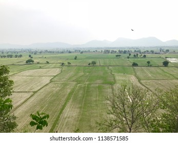 Paddy Field from top