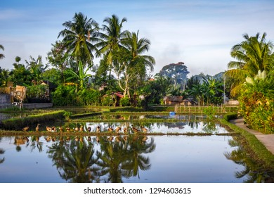Paddy field under water at sunset, Ubud, Bali, Indonesia