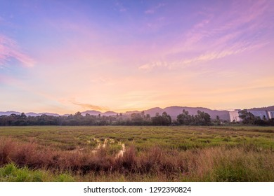 Paddy field view of sunrise or sunset background