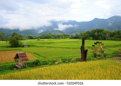 Paddy field view with water wheel in Nan, Thailand