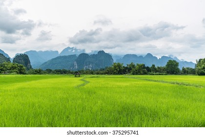 Paddy fields, mountains, sky soft and blur
