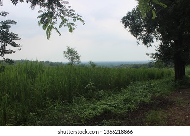 paddy fields in the suburbs
