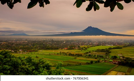 paddy fields with volcanic mountain background. mount merapi aerial view