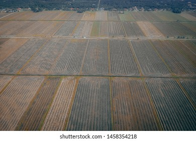 paddy garden pattern on aerial photgraphy