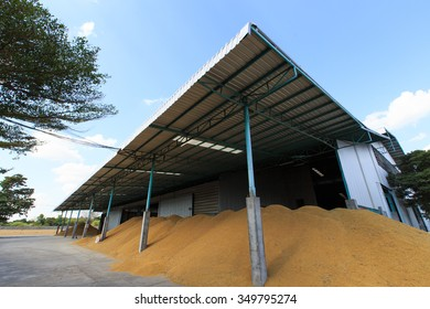 Paddy rice drying to reduce humidity
