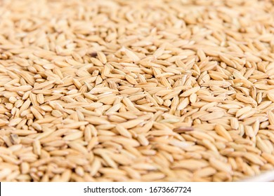 paddy rice or husked rice