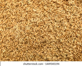 paddy rice in Thailand, food paddy rice. background, surface, Background from pile of paddy rice and and rice seed.