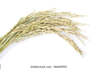 paddy seeds rice on white background