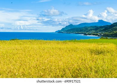 Paddy terrace farm near the sea under blue sky, shot at Xinshe, Fengbin Township, Hualien County, Taiwan, Asia.