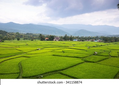 paddy,Nan,Thailand.