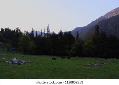 Padri campsite (Himalayan meadow/Bugyal), near Kasol, Himachal, Indian Himalayas