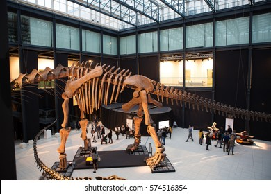 PADUA, ITALY - FEBRUARY 05, 2017: Dinosaur. Exhibition of giants from Argentina' at the San Gaetano Altinate culture centre (Argentinosaurus).