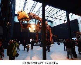 PADUA, ITALY - JANUARY 6, 2017: a dinosaur skeleton reconstruction (Argentinosaurus huinculensis) at the Argentine Dinosaur exhibition in Padua, at the cultural center Altinate - San Gaetano.