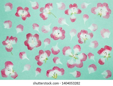 Flower+colouring+pages Stock Photos, Images & Photography ...