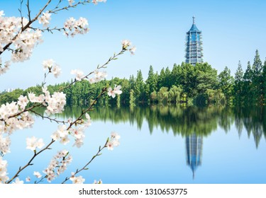 Pagoda and cherry blossoms by the lake, Nanjing cityscape of China.