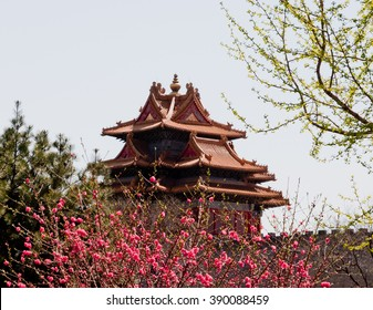 Pagoda surrounded by a a blossoming tree