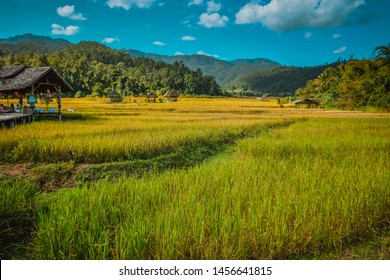Pai, Thailand - November 17th 2018 : Rice Field in Pai, Thailand. Green, yellow and cloudy color.