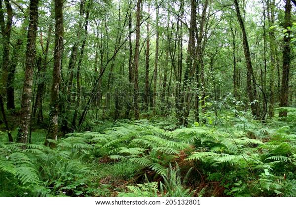 Forêt de Paimpont, Bretagne, France.