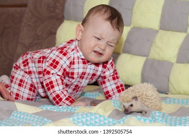 pain concept. prick the risk. hedgehog and child. cute Pets. on the couch