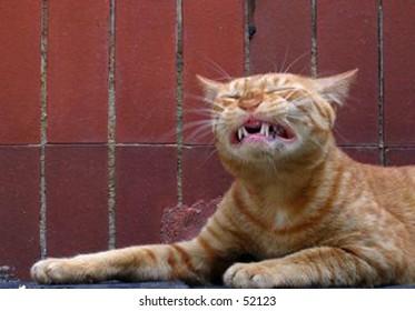 painful cat