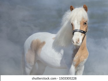 Paint American Miniature Horse on nature background in light smoke.