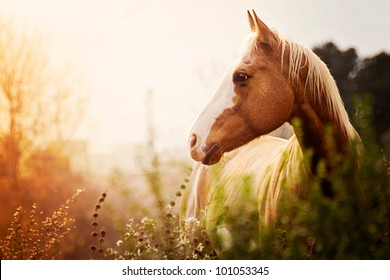 Paint Mare at Dusk in Field