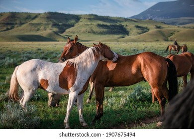 Paint pony and ranch horse friend on the range in montana