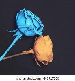 Paint Roses on black background. Minimalism fashion art.