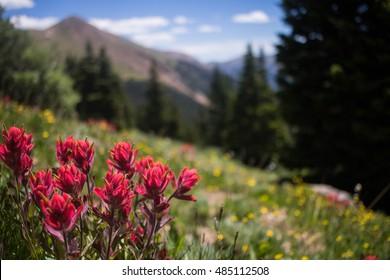 Paintbrush on the Mountain