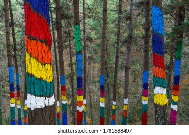 Painted forest of Oma Valley in Urdaibai Biosphere Reserve of Bizkaia province in the Basque Country Autonomous Community of Spain in Europe