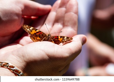 Painted Lady Butterfly on hands