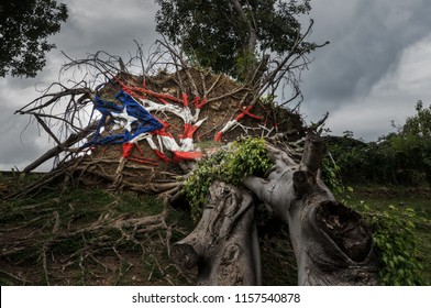 Painted Puerto Rico state flag on uprooted tree from Hurricane Maria in San Juan, Puerto Rico.