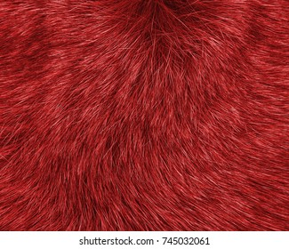 painted red natural fur texture as background