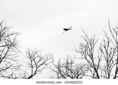 Painted Stork bird and dry branches, black and white image.