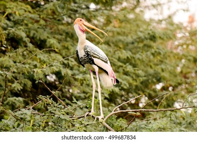 A painted stork looks back at Delhi Zoo.