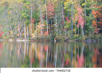 Painted trees reflected