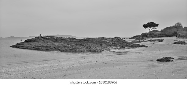 Painting-like  picture showing a beach in north of France during low tide in autumn. Fishermen and an isolated cypress tree are visible on the rock (Black and white picture, Brittany, september 2020)