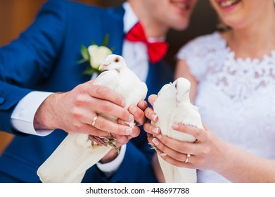 A pair of beautiful white doves.  white pigeon