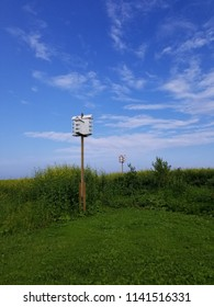 A pair of bird condos on tall wooden poles erected in a meadow of wildflowers, framed by a blue sky with thin clouds. Perspective vertical view..