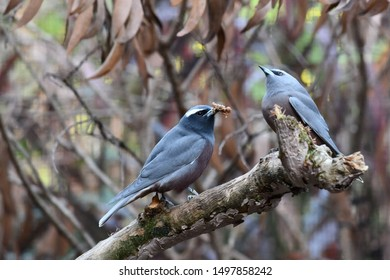 Pair of Birds feeding each other
