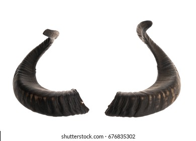 Pair of black ram horns, isolated on white background