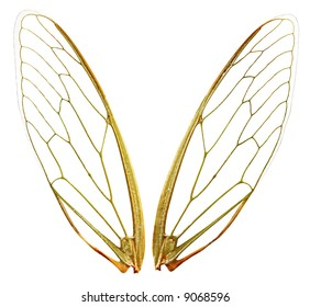 A pair of cicada wings, with clipping path.  Perfect for any design where you need fairy gossamer wings.  Each wing photographed individually.