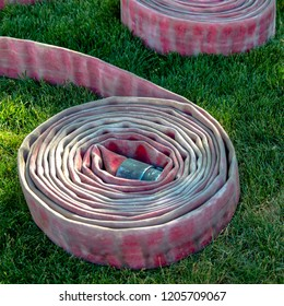 Pair of coiled firehose on sunlit grassy ground