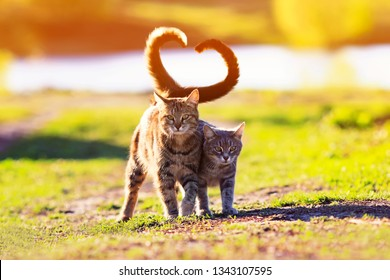 a pair of cute lovers striped cat walking on a Sunny path in a warm spring garden twisting their tails in the heart