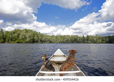 Pair of dachshunds, one long-hair, one short riding in fore of canoe in Adirondack lake with sky, clouds & forest in the background