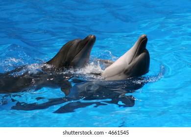 Pair dances of dolphins.