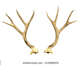 A pair of deer antler on white background