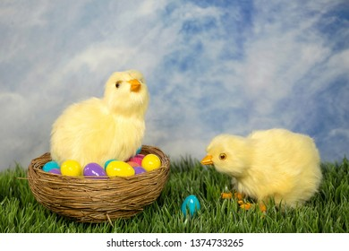pair of fluffy baby chicks in nest and green grass with colorful Easter eggs