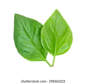 Pair of fresh green leaves of basil isolated on white top view
