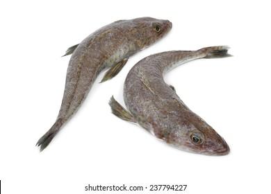 Pair of fresh raw dusky flathead fishes isolated on white background